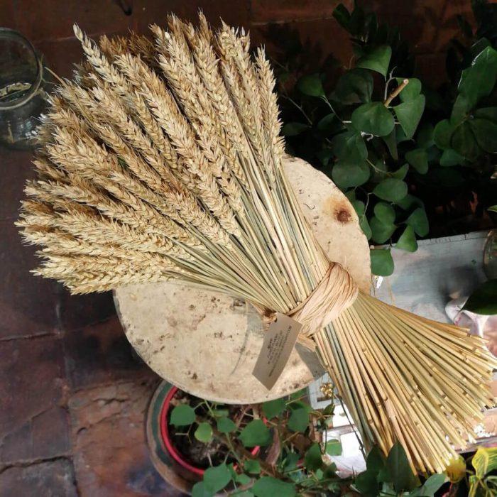 Flores liofilizadas, preservación floral y ramilletes de trigos preservados