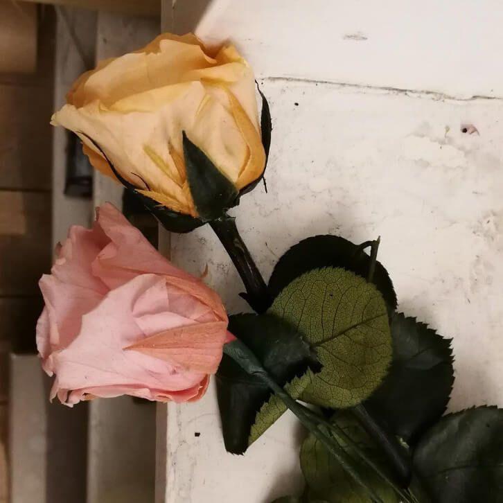 Rosas eternas preservadas y liofilizadas para toda la vida