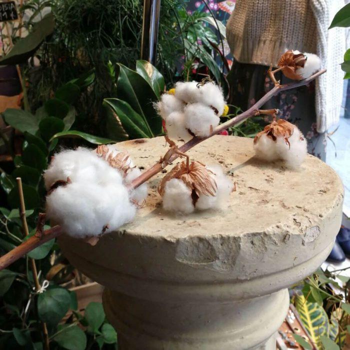 Flores de algodón venta online envio urgente