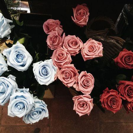 descubre las rosas azules rojas y cerezas eternas