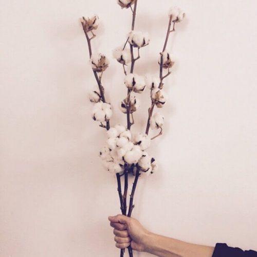 Flor del algodón en Madrid