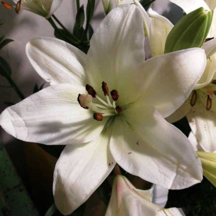 Flor de lili a domicilio en Madrid