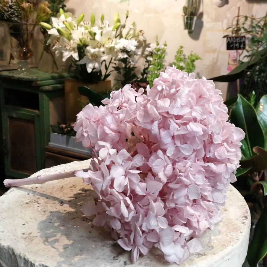 Hortensias liofilizadas preservadas