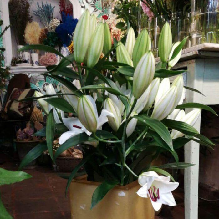 Envío a domicilio de ramos de liliums orientales