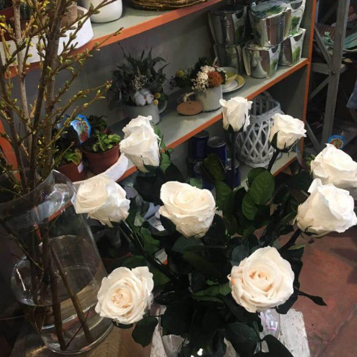 Las rosas preservadas son eternas, duraderas durante muchos años