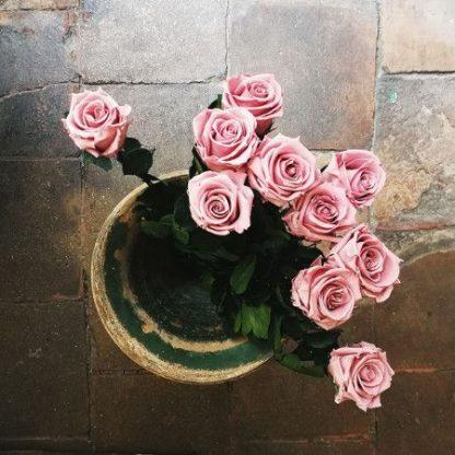 rosas liofilizadas de color rosa