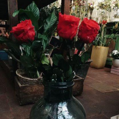 Preciosas rosas preservadas de color rojo