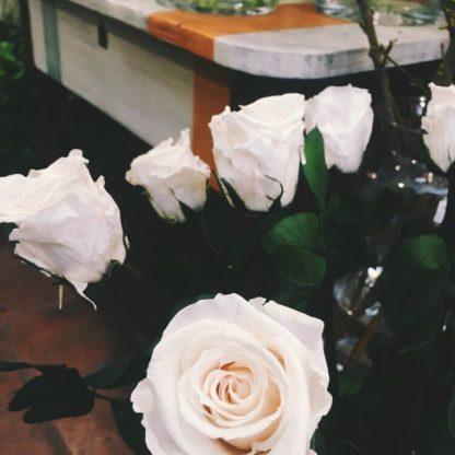 Nuestras rosas secas son eternas y duraderas durante años