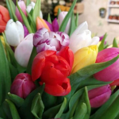 Venta de tulipanes de colore en Madrid centro