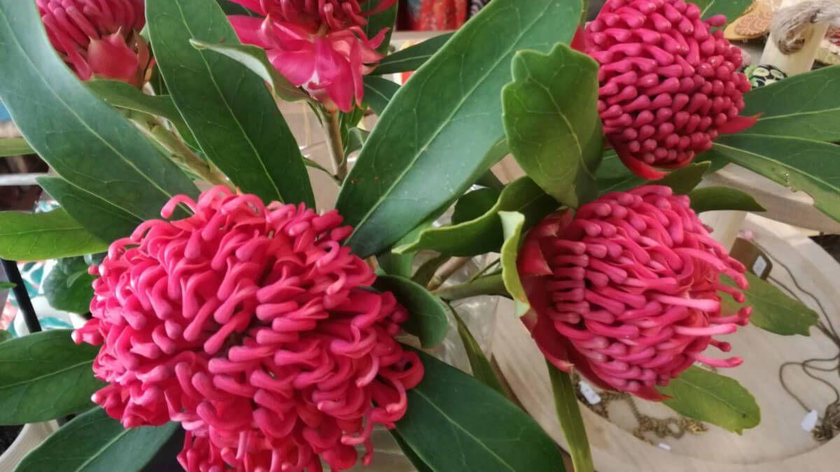 descubre cuantos tipos de flores hay en el mundo