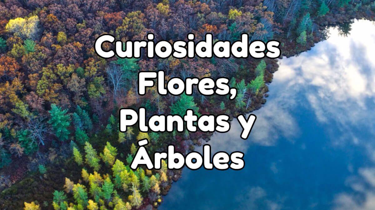 curiosidades de las flores plantas y arboles explicadas paso a paso