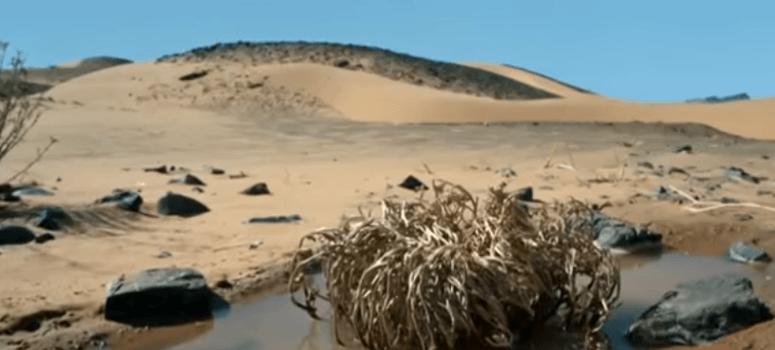 la rosa de jerico en el desierto del sahara