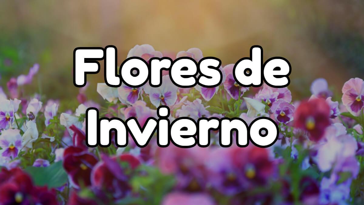 flores de invierno
