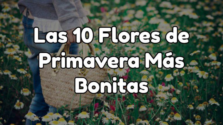 10 flores de primavera más bonitas