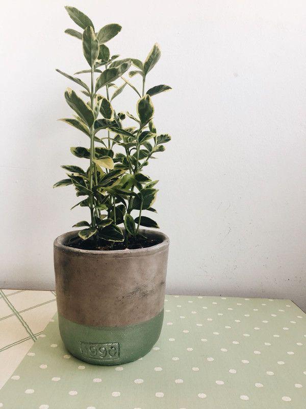Planta decorativa con macetas de colores