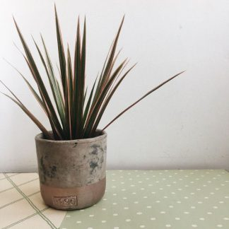 Maceta de porcelana con planta variada