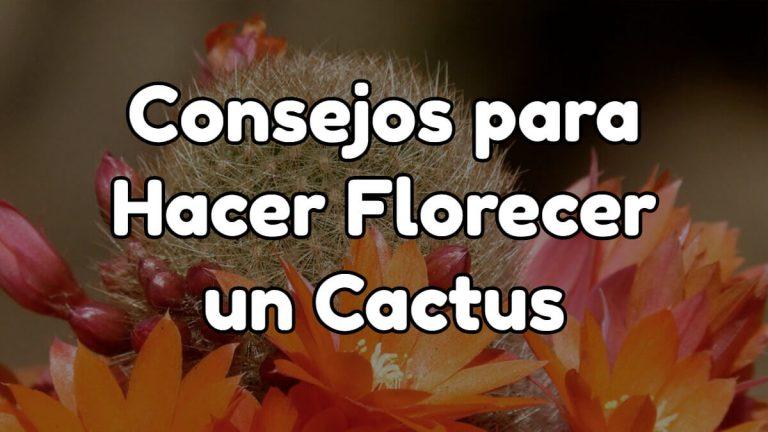 trucos y consejos para florecer un cactus