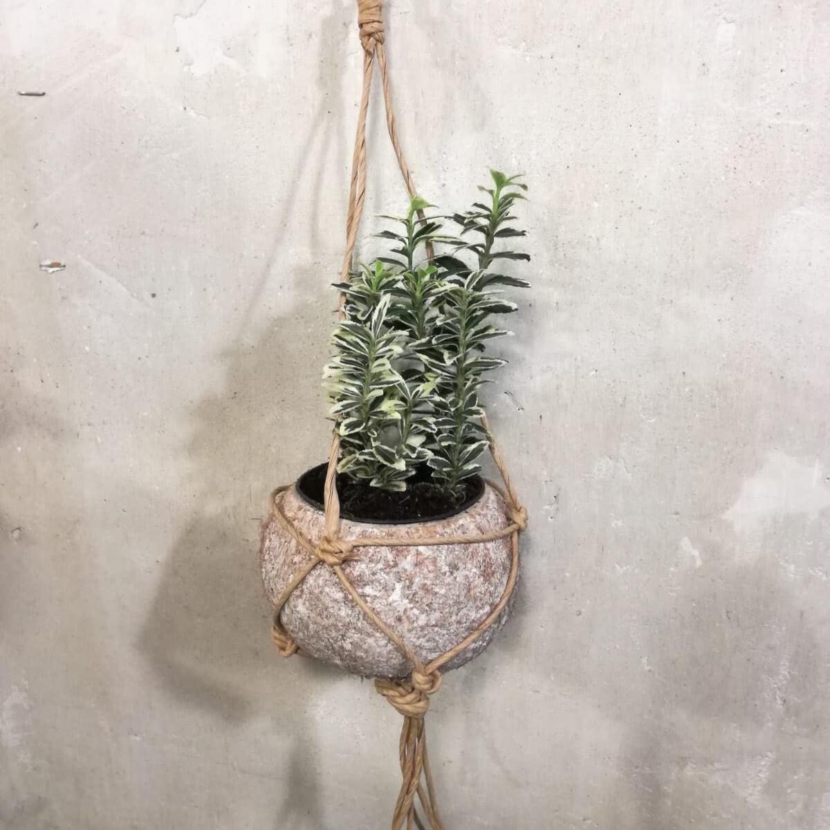 Maceta de coco con planta variada