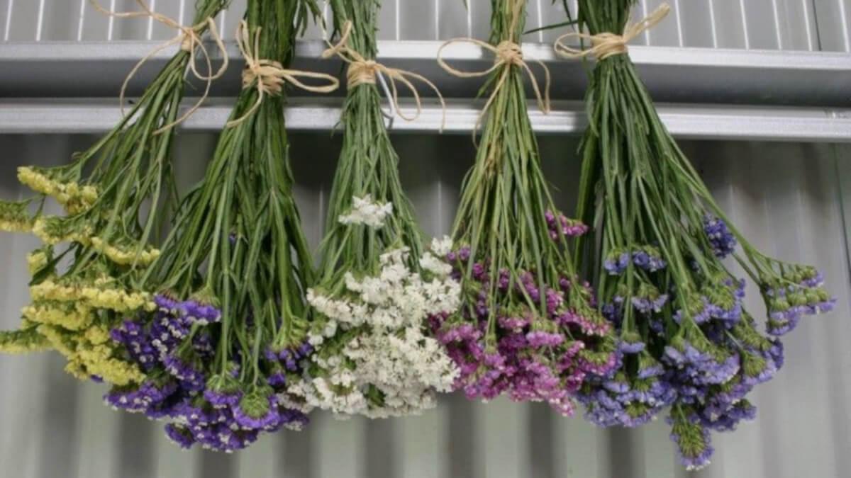 colgar las flores boca abajo para terminar la liofilización floral