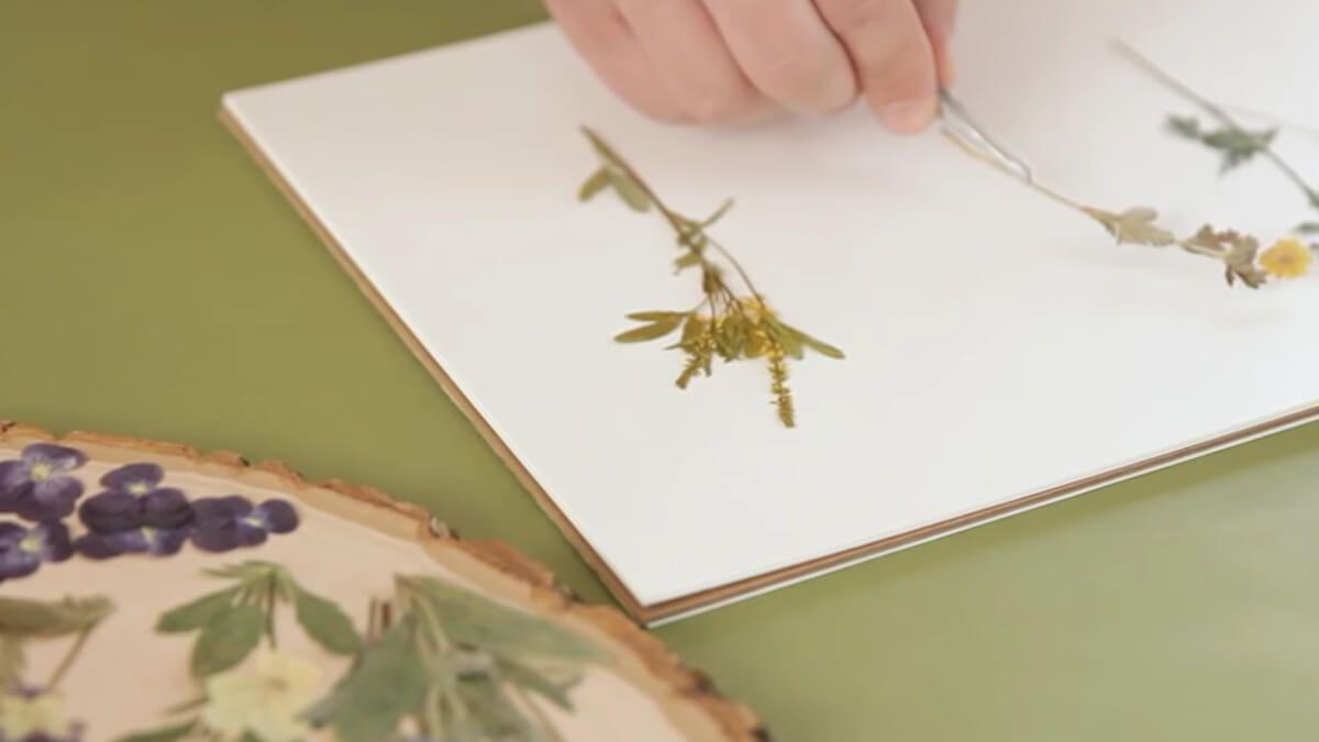 Colocar las flores sobre el papel formando diferentes dibujos y formas