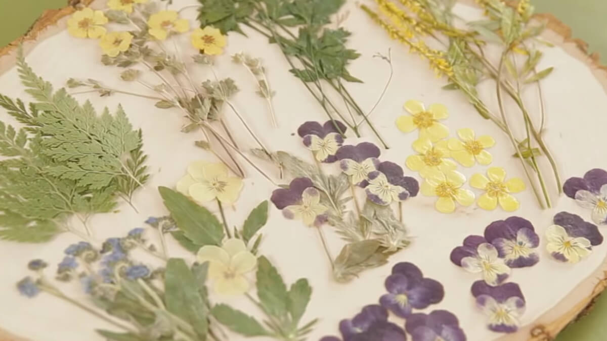 Conjunto de flores deshidratadas a utilizar
