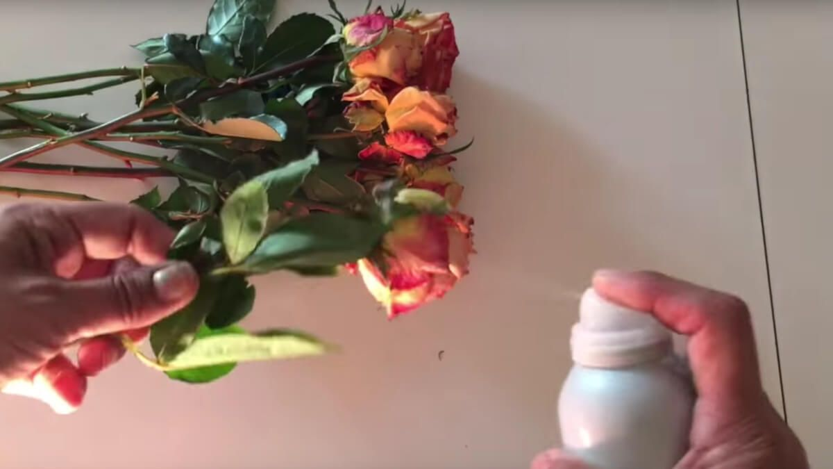 Utiliza laca para conservar las flores