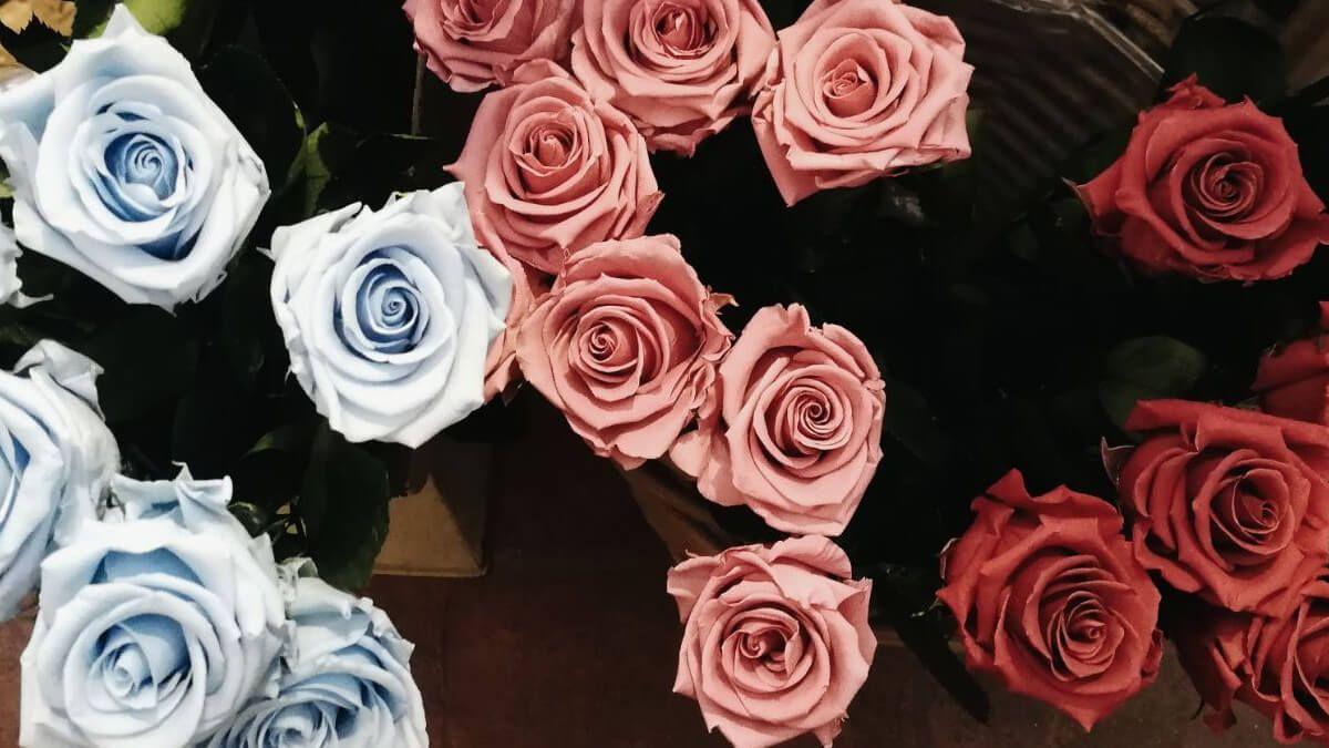 seleccionar minuciosamente las mejores flores