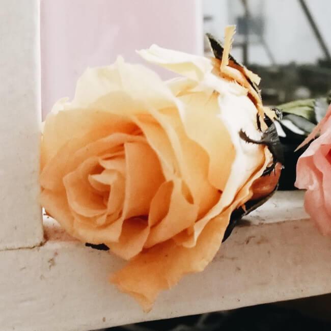 Rosa eterna color amarillo