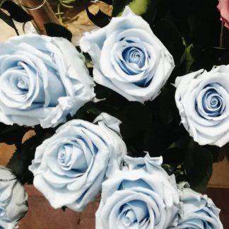 Rosa liofilizada azul
