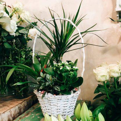 cesta con plantas
