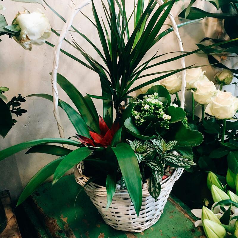 cesta con plantas para regalar