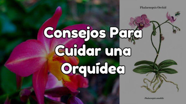 Cómo cuidar una orquídea paso a paso