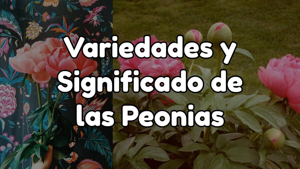 variedades y significado de las peonias