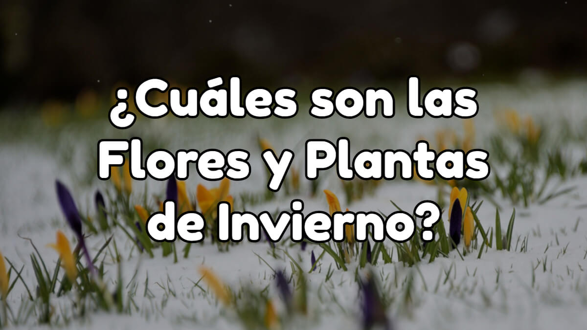 cuáles son las flores y plantas de invierno