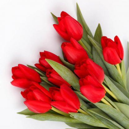 Bouquet tulipanes rojos