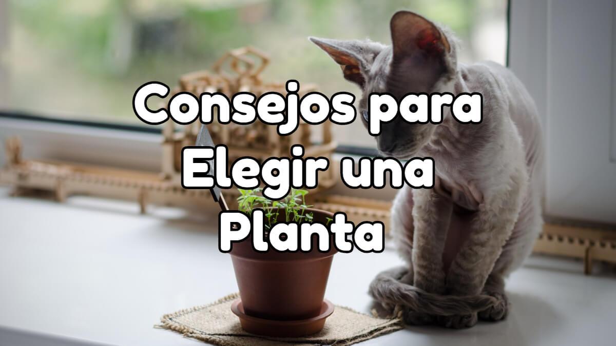 Consejos para elegir una planta para tu hogar, jardín o terraza