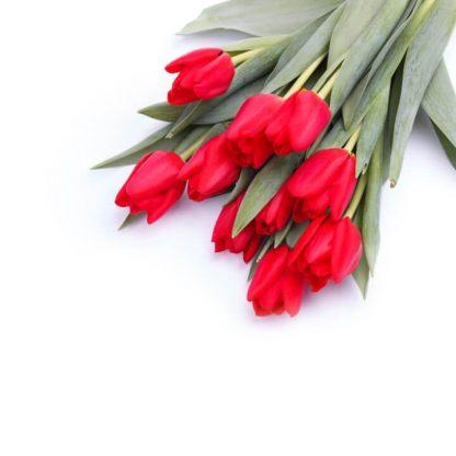 Envío a domicilio de tulipanes rojos