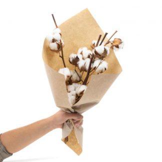Ramo de flor de algodón
